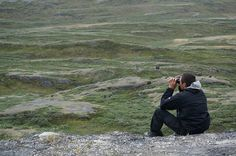 Wilderness guide Jens-Pavis Brandt scours the landscape for the elusive muskox. Image by Anita Isalska / Lonely Planet