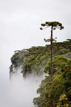 Parque Nacional da Serra Geral - Cambará do Sul, Rio Grande do Sul