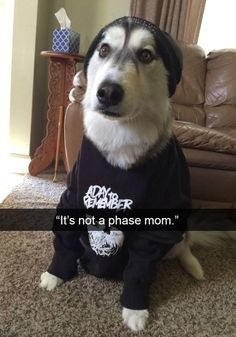 Rebellious teenage hoodiedog http://ibeebz.com