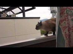 Un chat saute d'un balcon... FAIL