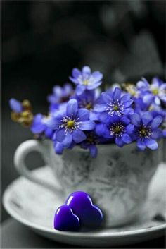 Blue flowers and hearts Beautiful Flowers, Beautiful Pictures, Deco Floral, All Things Purple, Belle Photo, Color Splash, Flower Power, Floral Arrangements, Bloom