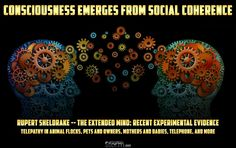 Consciousness Emerges From Social Coherence | Rupert Sheldrake -- The Extended Mind: Recent Experimental Evidence, Telepathy in Animal Flocks, Pets and Owners, Mothers and Babies, Telephone, and more - 11/9/2016  #SITS #StillnessintheStorm #Consciousness