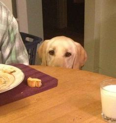 Dinner | 17 Words That Mean Something Different When You Have A Dog