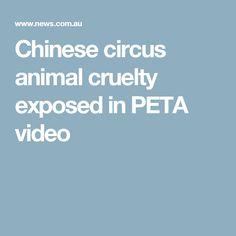 Chinese circus animal cruelty exposed in PETA video