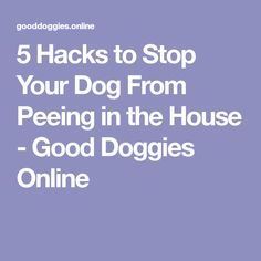 5 Hacks to Stop Your Dog From Peeing in the House - Good Doggies Online