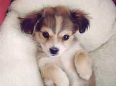 omg...soooo cute! what kind of puppy are you..cause i want you!! :D