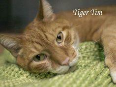 RIP sweet precious Tiger Tim. We love you.<3