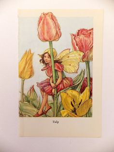 Flower Fairies Picture Vintage Bookplate Tulip Fairy
