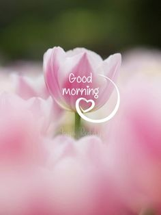 Good Morning Beautiful Pictures, Good Morning Images Flowers, Good Morning Roses, Good Morning Images Hd, Morning Pictures, Good Morning Smiley, Good Morning Thursday, Good Morning Gif, Good Morning Picture