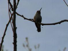 the hummingbird is my favorite bird.