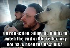 Watching the end of Old Yeller.lol I laughed way too much at this Old Yeller, Funny Dog Memes, Funny Dogs, Dog Humor, Dog Funnies, Silly Dogs, Movie Memes, Funny Animal Pictures, Funny Animals