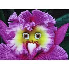 Resultado de imagen de orchid with face