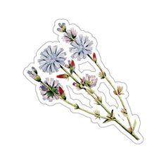 Items similar to Plant Stickers · Chicory Sticker · Botanical Stickers Tumblr Stickers, Anime Stickers, Laptop Stickers, Cute Stickers, Journal Stickers, Scrapbook Stickers, Airplane Drawing, Outdoor Stickers, Homemade Stickers