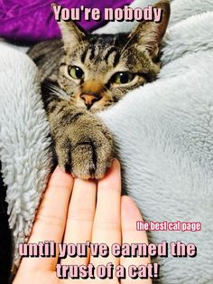 Kitty Accepting a Human's Trust - Tap the link now to see all of our cool cat collections!