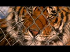 60 Minute special on The Wild Animal Sanctuary