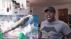 Great White Shark Cage Breach Accident REACTION!!!