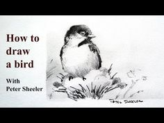 How to draw a bird, Quick, Easy and Fun. Plus Shading tips. Chickadee by Peter Sheeler - YouTube