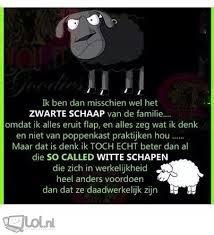 zwarte schaap zijn humor