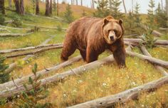 KYLE SIMS THE OLD BOAR oil on canvas 26 x 40 in (66h x 101.6w cm) $11,500  www.trailsidegalleries.com