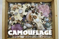 WonderWorks: Camouflage in Nature (Engineering) : library makers blog.