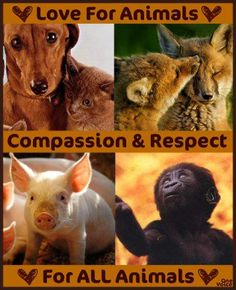 Respect all Animals
