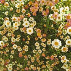 High-five for daisies ✋ #dasies #floral #asthetic #garden #gardener #flower #pink #summer #hippie #highfive #girl #teen #pretty #white #green