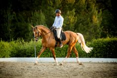 British Warmblood stallion Treliver D'Artagnan