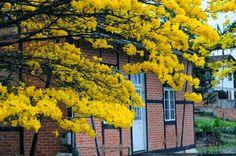 Respingos de amor, feixes de luz!: Flores que te quero FLORES Autumn Nature, Tree Forest, Season 3, Woodland, Fall, Colors, Amor, Autumn