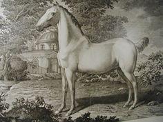 Museumsportal Berlin Museum, Berlin, Horses, Animals, Landscape, Animales, Animaux, Animais, Museums