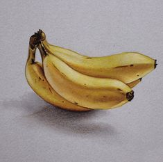 color pencil drawing fruit