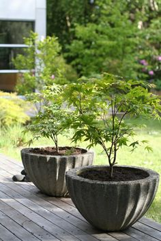 Awesome concrete pots with Japanese maple trees. Perfect for your deck, porch, patio, or even in the garden.