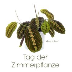 Tag der Zimmerpflanze am 10. Januar Plant Leaves, Fascinator, Plants, Blog, Summer Flowers, Flower Paintings, Shade Perennials, House Plants, Have A Good Night