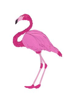 Flamingo Paperart Glicee Print Colourful art print of the original papercut flamingo ready to pin up, frame or give as a gift. Print will Flamingo Gifts, Tropical Home Decor, Bird Wall Art, Paper Animals, Colorful Wall Art, Bird Illustration, Paper Cutting, Art Prints, Art Art