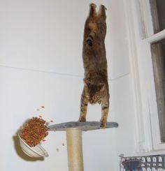 14. Este é ele chegando ao local da refeição!