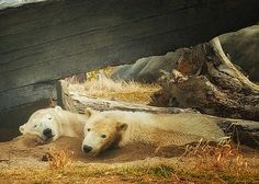 "trust me,the old expression ""let sleeping dogs lie"" works for bears too"