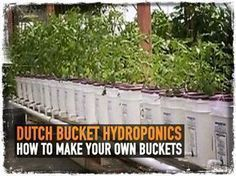 Dutch Bucket Hydroponics: How to Make Your Own Buckets #hydroponicgardening