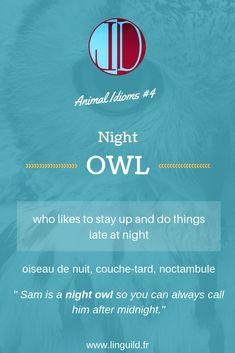 """Animal idiom: """"Night owl"""" 🦉 #EnAvantAnglais #EnglishIdioms #Idioms #Anglais #ApprendreAnglais LinguiLD /Idioms/ (Design by LinguiLD)"""