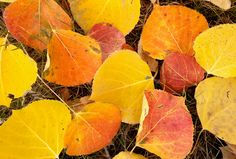 November gardening calendar - What you should be doing in your yard in November