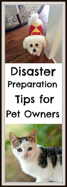 Easy steps you can take now to have what you need for your pets in case of a disaster or emergency. Get #PetPrepared today! #ad #petlover