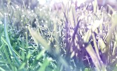 Dew by Jasmine Blanshard-Whitton
