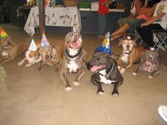 It's a Pitty Party