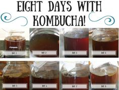 Eight Days With Kombucha! Fermenting Kombucha and what to expect.... ~Cultured Food Life