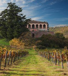 vineyard, Villa dei Vescovi, Luvigliano di Torreglia (Padova), Italy Veneto,