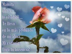 Una rosa para mi mamita que murió