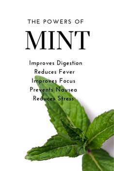 The taste of mint is a refreshing winner in so many ways, but did you know it can benefit you. - The taste of mint is a refreshing winner in so many ways, but did you know it can benefit your heal - Healthy Herbs, Healthy Kids, Healthy Recipes, Healthy Treats, Drink Recipes, Salad Recipes, Dinner Recipes, Pregnancy Nutrition, Pregnancy Tips