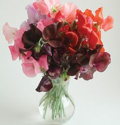 Sweat peas - Can't you just smell them?