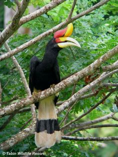 Borneo Safari | Wildlife Trails