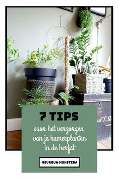 In deze blog vind je 7 verzorgings tips die er voor zorgen dat jou kamerplanten happy