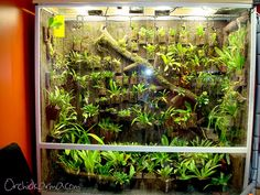 Orchid cool vivarium, via Flickr.