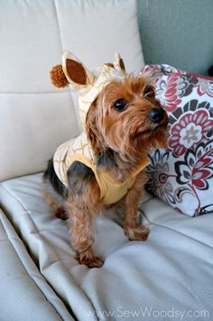 Martha Stewart Pets via SewWoodsy.com